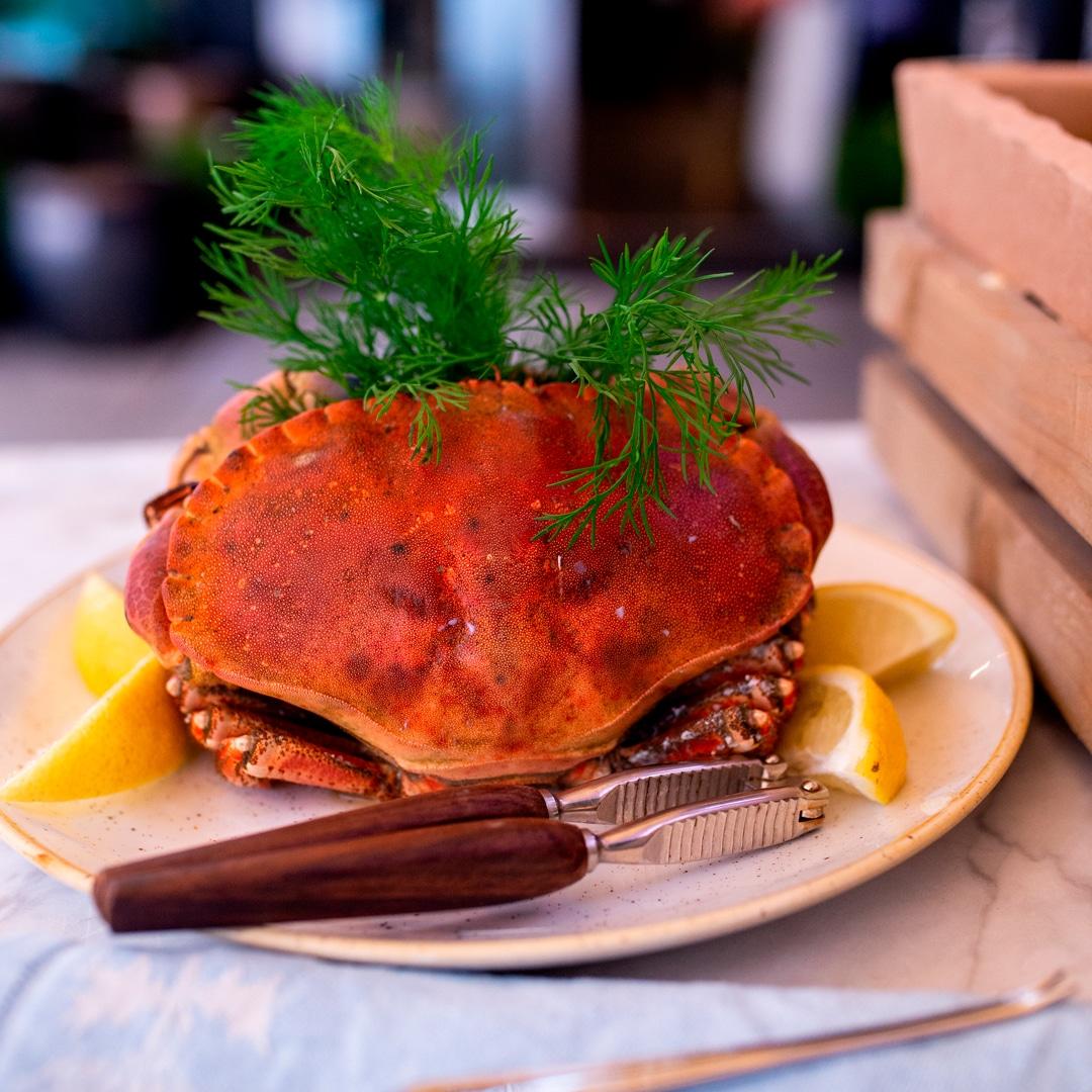Krabbe fra Maschmanns